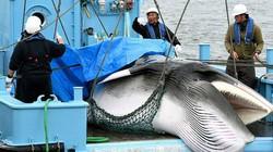 Quốc gia lần đầu tiên không đi săn cá voi sau 17 năm