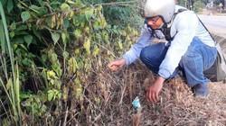 Kon Tum: Phát hiện thêm quốc lộ 14 bị phun thuốc diệt cỏ