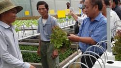 Phát triển trồng rau công nghệ cao: Yếu khâu quy hoạch, tiêu thụ