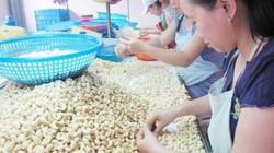 Mỹ giảm nhập khẩu điều của Việt Nam: Đáng lo ngại!