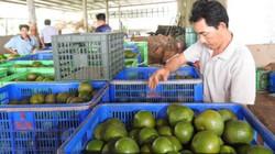 Bắc Tân Uyên: Hàng loạt HTX, tổ hợp tác có doanh thu tiền tỷ