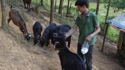 Làm giàu ở nông thôn: 9X xứ Nghệ viết kỳ tích ở Khe Voong