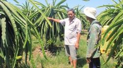 """Làm giàu khác người: """"Cổ phần"""" với nông dân trồng thanh long"""