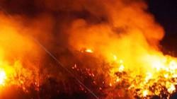 Cháy 10ha rừng ở Bình Định: Nghi do thợ đốt ong rừng (?)