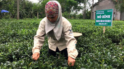 Hà Nội: Nhiều diện tích hoa, cây ăn quả cho thu nhập tiền tỷ