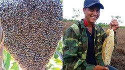 """Hành trình 1 ngày đi săn của 2 kẻ """"ăn ong"""" nổi tiếng Văn Kê"""