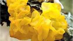 5 loại nấm không chỉ đẹp như cổ tích mà còn ngon, bổ không tưởng