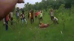 """Ấn Độ: Mặc hổ """"xin tha"""", 40 người cầm gậy giận dữ vẫn đánh đập đến chết"""