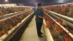 Nông dân Việt Nam xuất sắc: Anh chăn vịt trở thành tỷ phú trứng