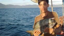 Loài cá không xấu, không độc hại sao dân đảo Lý Sơn  gọi tên tà ma?