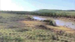 Video: Ngựa vằn thoát hàm cá sấu, lên bờ rơi vào ổ phục kích của kẻ dữ tợn hơn