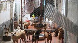 Ảnh, clip: Mất ngủ, bỏ nhà vì trại cứu hộ động vật giữa khu dân cư