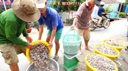Hoa mắt ở Trường Xuân-chợ cá tôm lộ thiên lớn nhất miền Tây