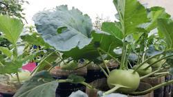 """Các loại rau quả thích hợp cho nông dân phố """"nghịch ngợm"""" trên mái nhà trong tháng 8"""