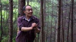 """Nhận """"quả báo"""", người đàn ông một chân dành 32 năm để trồng rừng"""