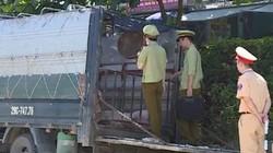 Ngang nhiên vận chuyển 22 con lợn không giấy tờ qua vùng dịch