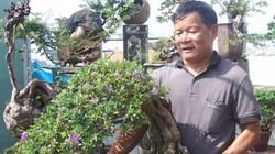 """Đưa bonsai lên sân thượng, nông dân phố làm """"lý lịch"""" cho linh sam"""