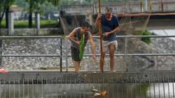 """Ảnh, clip: """"Cần thủ"""" rủ nhau ra sông Kim Ngưu bắt cá mặc mưa bão"""