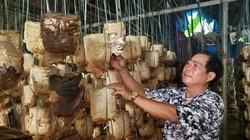 Đà Nẵng: Giữa thành phố trồng nấm này bán chạy như tôm tươi