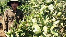 """Chuyện lạ Lâm Đồng: Trồng """"lung tung"""" ở vườn cà phê đâu ai chê"""