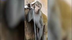 Khỉ uống nước và hành động nhỏ sau đó khiến nhiều người phải tự thấy xấu hổ