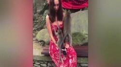 Video: Người mẫu nóng bỏng đỏ mặt vì bị khỉ sờ ngực