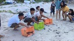 Quảng Nam: Hơn 1.700 trứng rùa Côn Đảo ấp nở ở Cù Lao Chàm