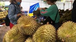 Khánh Hòa: Nườm nượp đi qua giàn bầu vô xem, mua rau, quả độc-lạ