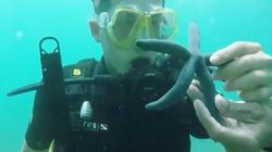 Bị tố hủy hoại sinh vật biển, ban tổ chức Cuộc đua kỳ thú lên tiếng nhận lỗi