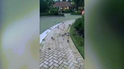 """Video: Hàng trăm con cua xâm chiếm đường phố Mỹ gây """"ác mộng"""""""