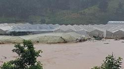 Nguyên nhân bất ngờ khiến phố núi Đà Lạt ngập chìm trong nước