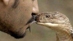 Tứ đại rắn độc giết gần 50.000 người mỗi năm ở Ấn Độ