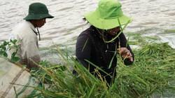 Nước sông Mẹ Krông Ana dâng cao, dân trắng đêm đắp đê cứu lúa