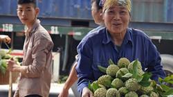"""""""Lên đời"""" na Chi Lăng theo chuẩn VietGAP, GlobalGAP"""