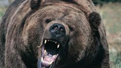 Gấu đen đột nhập vào nhà qua cửa, lúc ra đi thẳng qua tường tạo nên lỗ hổng lớn