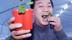 Trồng cỏ cực hiếm 10.000 cây mới có 1 cây, người đàn ông kiếm hơn 2 tỷ/tháng