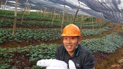 Lào Cai: Giông lốc mạnh, mưa đá trắng trời, đá đóng thành tảng to