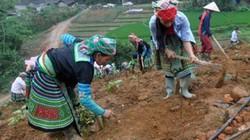 Về bản vùng cao Yên Bái xem đồng bào Mông làm nông thôn mới