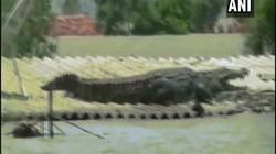 Video: Cá sấu khổng lồ leo lên nóc nhà dân gây sửng sốt ở Ấn Độ