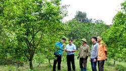 Phúc Ninh: Vùng quê nơi những vườn cây trái xanh ngút tầm mắt