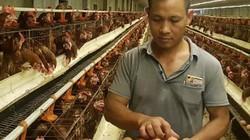 """""""Đột nhập"""" trại gà siêu đẻ VietGAP 4 vạn con, lớn nhất đất Nam Định"""