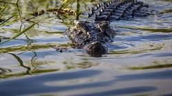 Philippines: Bé trai bị cá sấu lôi xuống sông, hôm sau tìm thấy cảnh đau lòng