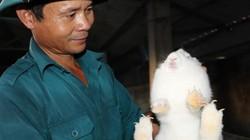 Lai Châu: Nuôi giống thỏ mắn đẻ, vừa khỏe người lại có tiền tiêu
