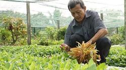 Đặc sản rau rừng Tây Ninh hiên ngang tiến vào các siêu thị lớn