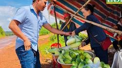 Vùng đất dưa chuột ra trái to, có trái nặng 2,5kg, ăn mát ruột