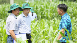 Ảnh: Chuyên gia quốc tế đến Việt Nam bàn cách diệt sâu keo mùa thu