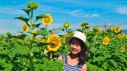 Háo hức check-in cánh đồng hoa mặt trời khổng lồ ở Quảng Nam