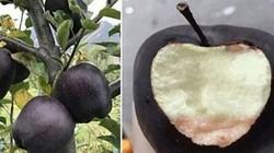 """Giới nhiều tiền chi nửa triệu bạc mua một trái táo """"đen như than"""""""