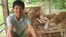 LẠ: Đánh liều nuôi con rậm lông trên đất Phủ Quỳ, bán 200 ngàn/kg