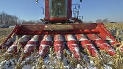 """Ngừng mua nông sản Mỹ, Trung Quốc nhận """"gáo nước lạnh"""" từ Nga"""